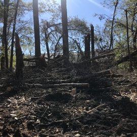 Before - Tree & Debris Removal & Yard Clean in Bainbridge GA
