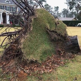 Before - Root Ball Removal in Bainbridge GA